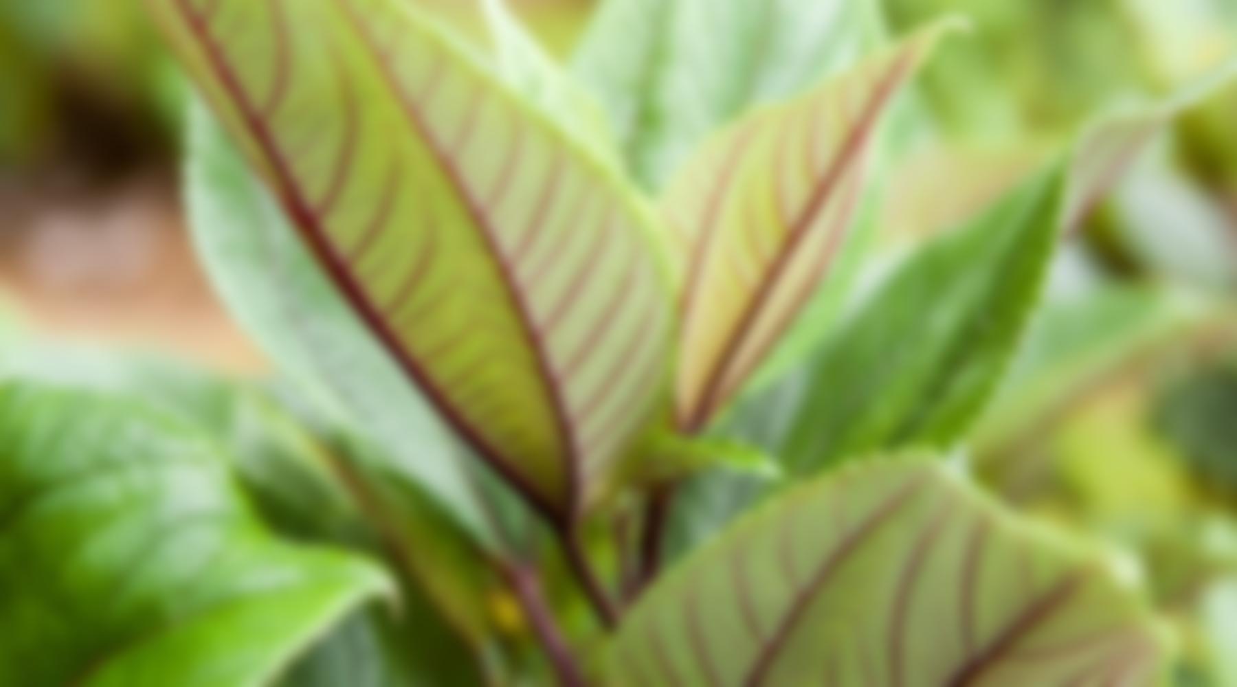 Background-Blur